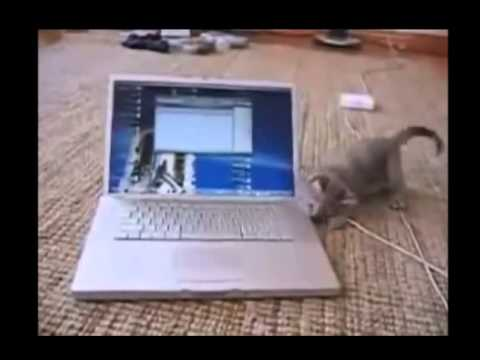 Image of: Compilation Funny Cats Compilation Funny Cat Videos Ever Funny Videos Funny Animals Funny Animal Videos Animal Videos Online The Dog Relm Funny Cats Compilation Funny Cat Videos Ever Funny Videos Funny